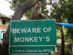b of monkeys