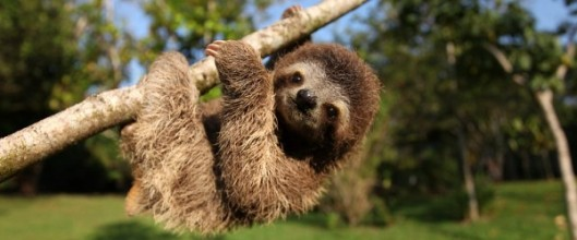 sloth-600x250